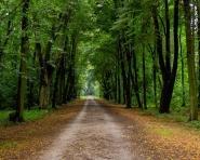 CITY TRAIL onTour - wirtualnie | Łódź - Park Baden-Powella